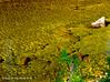 """Lake Fork Creek (jimgspokane) Tags: lakeforkcreek creeks mountains camping idahostate forests """"nikonflickraward"""" otw"""