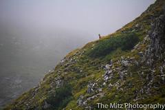 IMG_3452 (The Mitz Photography) Tags: gams grünersee hochschwab mariazell maryclan murmerl mädels nebel pilgern sommer steinbock wandern