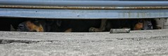 Esperando (Mariano Montes | HDsuperbikeVideos) Tags: photography photographie fotografia crdoba crdobaargentina argentina arg cba nikon nikonargentina flickr flickrcordoba panorama panoramica animales perro perros dog dogs mascotas