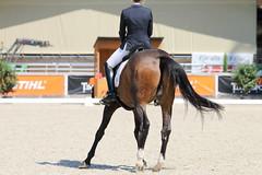 IMG_7695 (dreiwn) Tags: dressage dressur dressuur pferd reitturnier turnierreiten pferdesport horse horseback horseriding equestrian reitverein dressurprfung kandare doublebridle reiten pferde reitplatz ridingarena