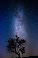 Milchstrasse4-1192 (math.buechel) Tags: creuxduvan switzerland suisse schweiz kitobjektiv kitlense d7000 nikond7000 nikon tree baum sterne universum all himmel galaxy stars night space sky milkyway milchstrasse