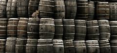 Stray. Wandering. (Francesc Candel) Tags: gato cat barrels barril stray wandering extraviado errante perdido vino tenderness ternura fbrica wine