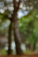 Le Parc Naturel Forestier de la Croix des Gardes - Cannes 0.2 (bresciano.carla) Tags: naturalmente pentaxart pentaxk500 trioplan100mm manuallens vintage bokeh trees colors bubbles flickr light