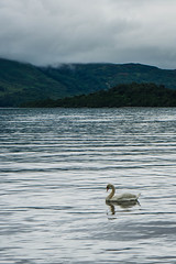 Grey Sky and Sea (akibamir9) Tags: scotland highlands nature lochlomond swan lake water