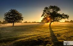 Paddock Sunrise (Rob Felton) Tags: cardington bedford bedfordshire felton robertfelton sky skyscape cloud light silhouette tree trees paddock gold goldenhour sunrise mist eos7d canoneos7d kitlense