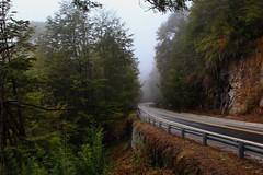 La niebla y la magia (sere.arretche) Tags: niebla magia magic nature canon route ph trees rain fog magestry 35mm picoftheday