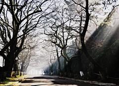 * (PattyK.) Tags: ioannina giannena epirus ipiros balkans mycity whereilive lovelycity ilovephotoggraphy fog morning lakeside lakefront ilovephotography wintermorning trees februay winter 2013 βαλκάνια ιωάννινα γιάννενα ήπειροσ ηπόλημου όμορφηπόλη ομίχλη χειμώνασ φεβρουάριοσ