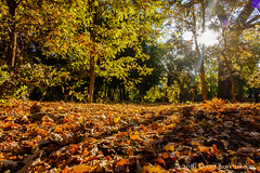 266366  23 September 2016  2nd Day of Autumn (Doug Churchill) Tags: 365 366 sonyrx100m3 project project366