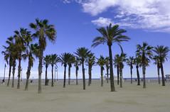 Platja del Cabanyal (marathoniano) Tags: naturaleza art beach nature see mar arte playa natura palmeras palm arena paseo passeig mediterráneo platja cabanyal valència poblat paísvalencià marítim marathoniano ramónsobrinotorrens