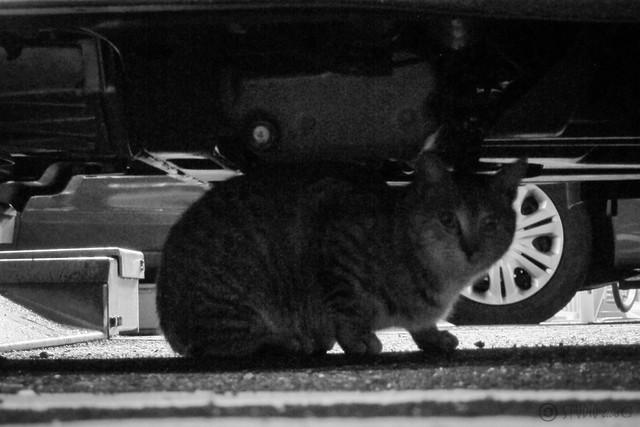 Today's Cat@2013-02-15