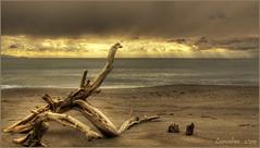 Marina di Alberese (GR) - parco dell'uccellina (leon.calmo) Tags: marina canon mare grosseto onde parcodelluccellina pineta alberese tronchi eos50d leoncalmo