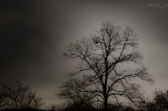 goodbye world (marios_ch) Tags: world trees sky white black tree bird eye abandoned nature field birds fairytale clouds forest 35mm dark grey nikon alone branch afternoon cloudy branches budapest silhouettes ground stick noentry goodbye 5100 nikkor dx 18g d5100 rememberthatmomentlevel1 rememberthatmomentlevel2