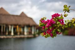Flowers, sky & water