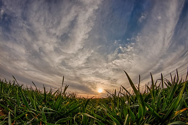 wheat field sunset - explore # 1