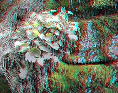 IMG_5568-DM-NewGrowth-SX1 (EdwardMitchell) Tags: red canon lumix stereoscopic 3d spokane cyan anaglyph powershot sx1 gh2