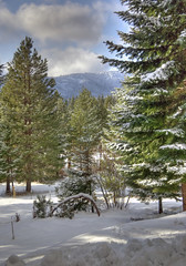 View from my window (h_roach) Tags: trees winter snow mountains cold vertical forest outdoors woods nopeople pacificnorthwest washingtonstate scenics cleelum cascademountains easternwashington natire coldtemperature rolsyn