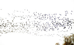 Birds I (Arkadious) Tags: bird nature poland przyroda birdwatcin