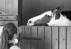 Rabo de cavalo, olho de gente (Ivan Costa) Tags: horse woman look olhar mulher stall sp paulo sao cavalo cocheira estabulo