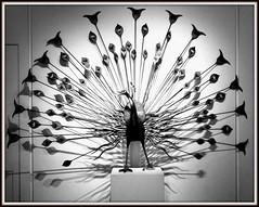 Pavoreal Peacock byn (Raul Jaso) Tags: blackandwhite bw bird byn blancoynegro birds museum mexico mexicocity df folkart crafts artesanias craft peacock aves muse ave museo museums ciudaddemexico pavoreal mexicodf centrohistorico artesania museos mexicancraft artesaniamexicana museodeartepopular