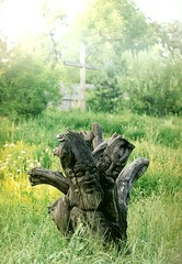 010_Ungvr_1992 (emzepe) Tags: wood sculpture tree art statue out wooden carved interesting folk ukraine trunk 1992 szobor kirnduls kerti ukraina rdekes  nyr oblast  mvszet fej ukrayina jlius ukrajna ungvr trpe krptalja fatrzs npmvszet  regiunea uhorod zakarpatska zakarpattia  faragott  subcarpatia ungwar  szervezett krptaljai