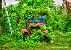 Country Fun (Aspenbreeze) Tags: rural vines texas country oldtruck overgrowth rustytruck greengrass countryscene vintagetruck rualscene aspenbreeze moonandbackphotography gpsetest bevzuerlein