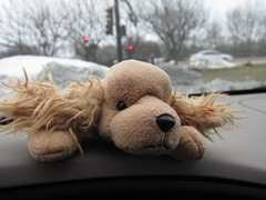 Beanie Baby found in Target Parking Lot Cart 3-11-13 01 (anothertom) Tags: dog car iowa ty spunky beaniebabies coralville