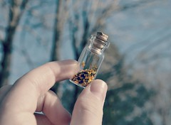 Jar Of Wishes. (Caboose) Tags: 3 glitter out photography photo doors hand personal quote d ninja lol c da wishes jar don lalala unicorn sparkly epic xd poptart enoy outsdie edite picmonkey