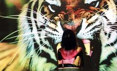 Under you skin - ROAR (Elena 'Lenny' Lentini) Tags: light colour colors animal projector tiger lenny elena roar tigre luce roberta proiettore ruggito lentini marceca elen95