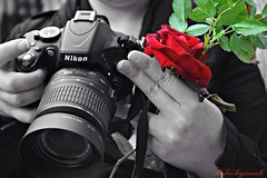 "Spring Nikon.... (Love me tender ♪¸.•*´¨´¨*•.♪¸.•*´) Tags: camera flowers red blackandwhite colors rose photography spring hands photographers athens greece plaka selective autofocus photoshooting dimitra anafiotika 2013 theunforgettablepictures ""nikonflickraward"" mygearandme ringexcellence nikond3100 rememberthatmomentlevel1 magicmomentsinyourlifelevel1 uploaded:by=flickrmobile flickriosapp:filter=nofilter kirgiannaki vigilantphotographersunite vpu2 vpu3 vpu4"