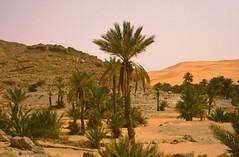 Taghit - Algeria, March 1988 (michael_jeddah) Tags: sahara algeria desert oasis palmtree algrie taghit algerien