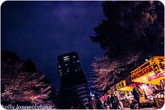 Tokyo Sakura (holly lanasolyluna) Tags: park family flowers people en primavera playground japan kids cherry photography tokyo photo spring shrine picnic blossom flor hana sakura koen hanami japons japn cerezo