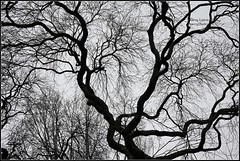 Life Lines (Harry Lipson III) Tags: blackandwhite tree nature silhouette branches details mothernature detailed lifelines arboreal airroot harrylipsoniii harrylipson harryshotscom harrylipson3 visitharryshotscom iinviteyoutovisitmywebsiteharryshotscom theunsungphotographer theunsungphotographercom totalslackerphotographycom totalslackerphotography thephotographyofharrylipson