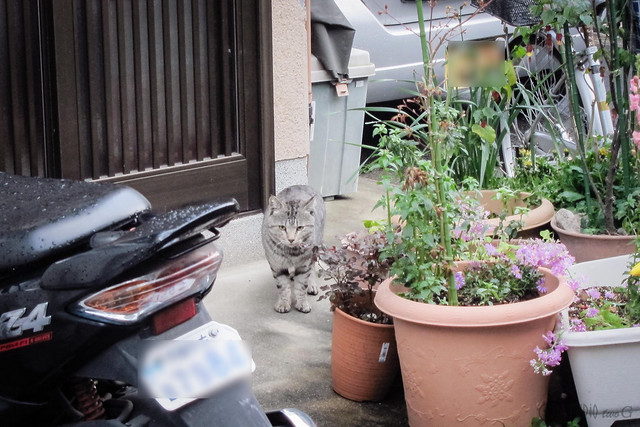 Today's Cat@2013-04-03