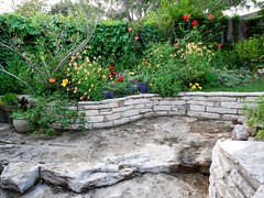 On the limestone ledge (pawightm (Patricia)) Tags: austin texas inmygarden centraltexas backyardborder dscn7538 pawightm limestoneledge earlyaprilblooms