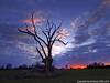 Against the Sunset - Dead Tree (Shottisham) (Daveyboy_75) Tags: sunset olympus deadtree dslr hdr lonelytree sunsettree shottisham lonesometree olympusdslr e450 againstthesunset b1083 olympuse450 sunsetdeadtree olympuse450dslr bawdseypeninsular deadtreeshottisham deadtreesuffolk shottishamsuffolk b1083road