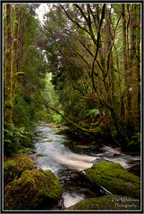 Franklin-Gordon Wild Rivers NP (The Whiteview Photography) Tags: park wild water forest river flow franklin nikon stream national gordon tasmania np tas d90 franklingordonwildrivernationalpark thewhiteview