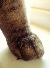 Paw (Nada*) Tags: boy cute animal mobile cat hair paw kitten feline soft phone stripes telephone tabby cell kitty gato paws 4s stripy iphone iphonegraphy instagram