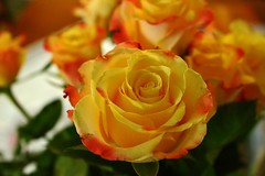 Roses (Eddie Crutchley) Tags: nature beauty flowers roses sunlight wonderful greatphotographers