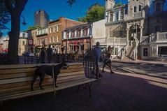 Saint jean street (lezumbalaberenjena) Tags: quebec city canada 2016 bully boston terrier dog perro chien