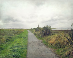 A coastal walk (Rona's whereabouts) Tags: galway ballyloughane renmore ireland burren august summer season weather sky sea cloud path walk hike straight boat horizon me myself i alone outdoors wander nature ocean atlantic climate plant friday