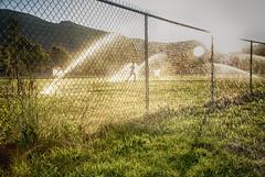 jogger2 (i.dinch) Tags: jogging exercise pregon mountains sunset siskiyou sprinkler water wet running silhouette shadow
