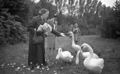 Feeding the swans (Arne Kuilman) Tags: germany 6x9 mediumformat 1930s thirties europe blackandwhite photonotmine maxmller ldenscheid swan zwaan swans