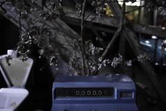 Caisse fleurie (Sarah Devaux) Tags: caisse enregistreuse fleurs séchées balance bois bleu nature morte de cerisier 20000 bordeaux bassin à flots garage moderne