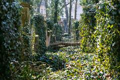 Under Ivy (Torsten Reimer) Tags: berlin efeu deutschland friedhof gravestones europa jdischerfriedhofschnhauserallee ivy graveyard europe cemetery germany de