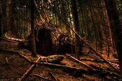 In The Woods (Billy McDonald) Tags: hdr woods forest scotland