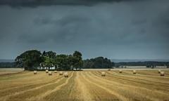fields (dovlindphoto) Tags: summer pentaz k3fields farm autmn