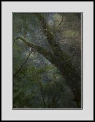 Dark Leaf Matter 230816/02 (Gibbom) Tags: chilternhills darkmatter darkenergy leaves trunks trees woodland nature natural uk me multipleexposures distagont235 distagon352ze standard mystery forest august