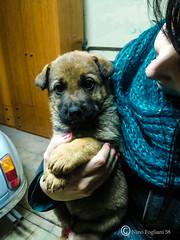 Tito (Nino Fogliani 58) Tags: tito dog cane piccolo cucciolo foto photo primopiano