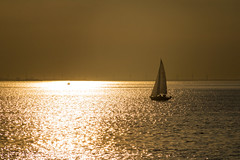 Sailing at Sunset (Infomastern) Tags: goodnightsunset malm vstrahamnen boat hav sailing sea solnedgng sunset exif:model=canoneos760d geocountry camera:make=canon exif:isospeed=100 camera:model=canoneos760d geostate geocity geolocation exif:lens=efs18200mmf3556is exif:focallength=200mm exif:aperture=16 exif:make=canon