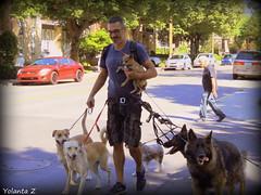 The dog walker. (Yolanta Z) Tags: dogwalker